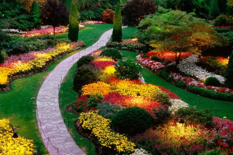 flower forest cool wallpapers, beautiful flower garden, wonderful garden (39)